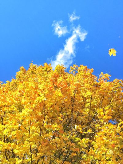 Check This Out Autumn Autumn Colors Sky EyeEm Gallery EyeEm Best Shots Eye4photography  Nature SimcoeCounty