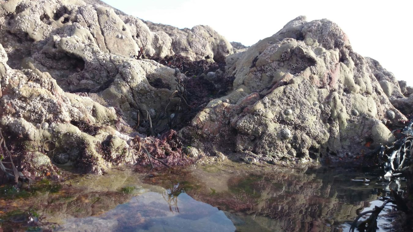 Beachphotography Rockpools The Gower In Beautiful Wales Minature