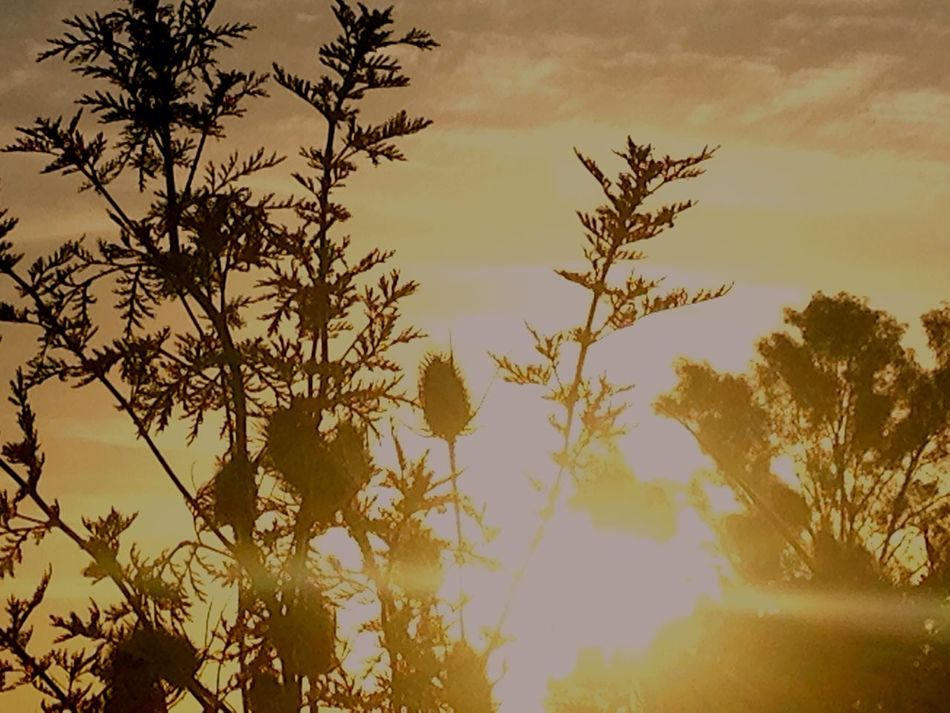Sunset Ordinary Pic Grass Sun Nature_collection EyeEm Best Shots First Eyeem Photo First Of Many 