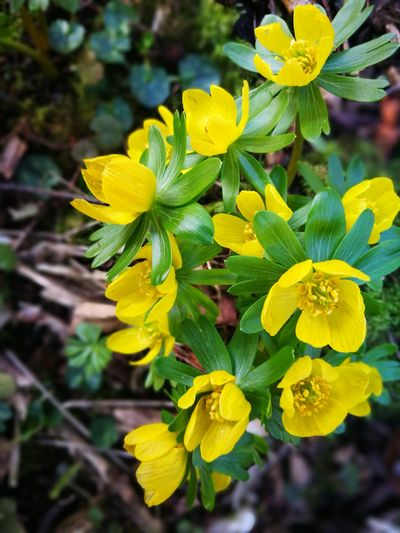 Growth Yellow Nature Leaf Plant Close-up Beauty In Nature Outdoors Freshness Flower No People Flower Head Day Fragility