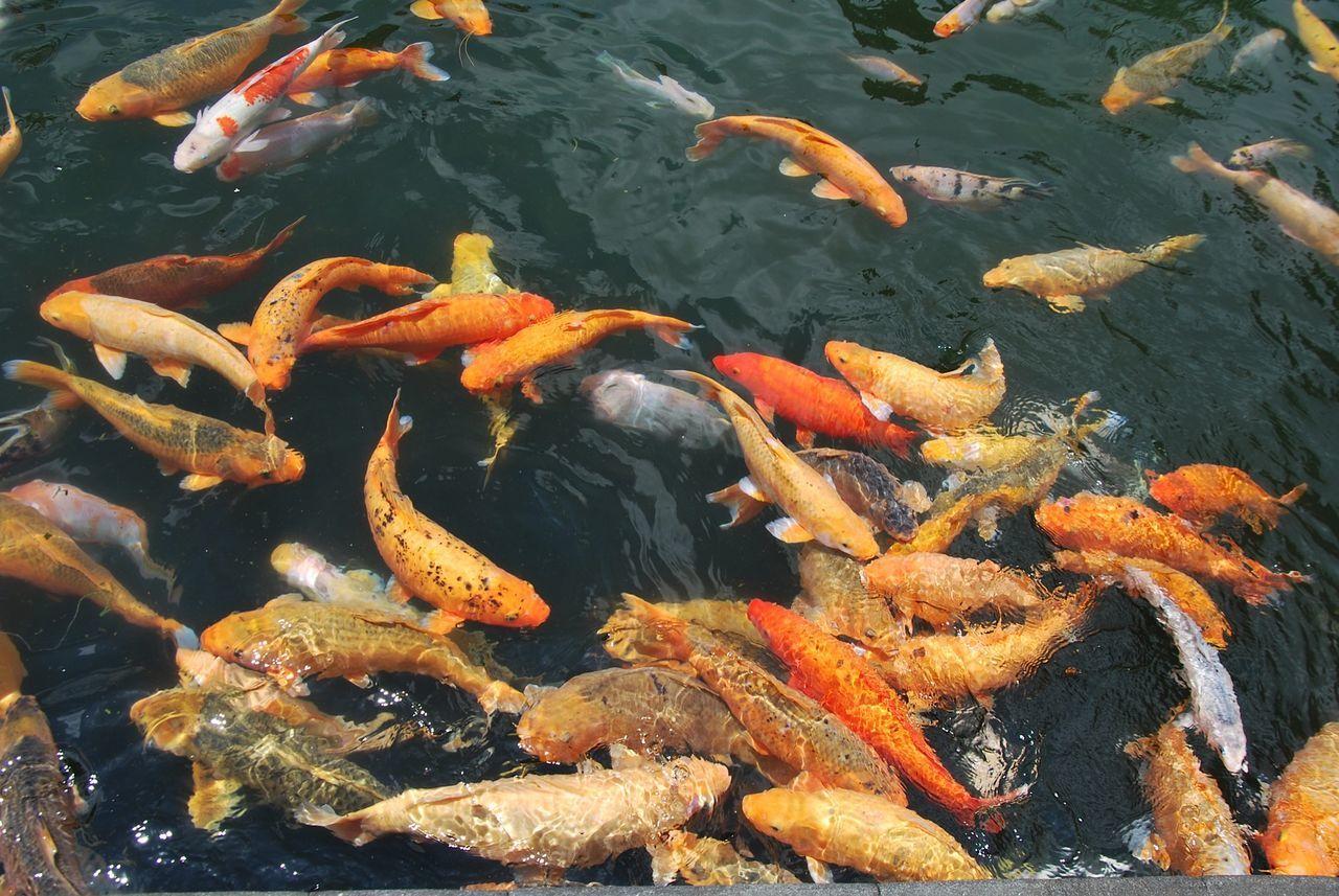 Fish Ponds #ponds