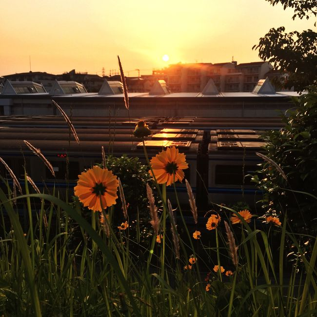 Flowers Low Angle View Eyeemphotography Sundown Naturelovers IPhoneography Iphonephotography Eyeem4photography Nature_collection