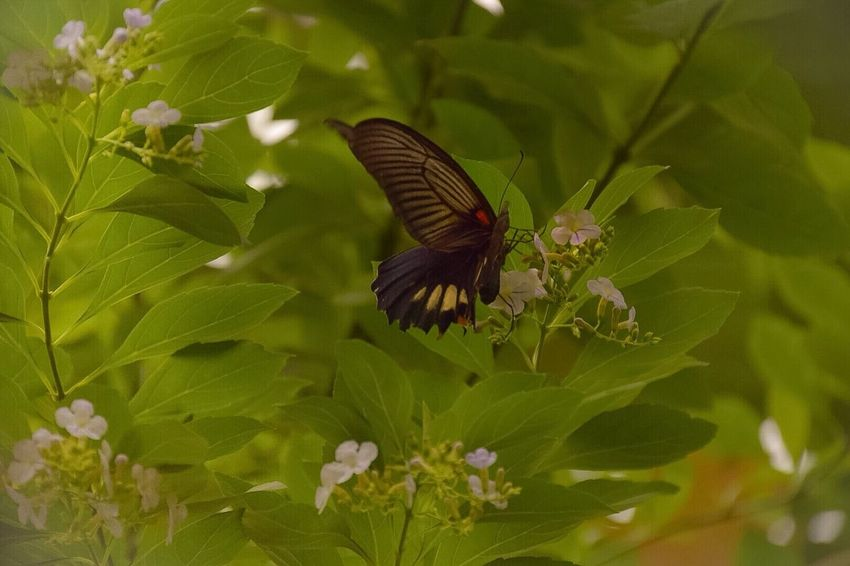 Leaf Plant Flower Butterfly - Insect One Animal Animal Themes Nature Growth Insect Animals In The Wild Fragility Beauty In Nature Outdoors Green Color Close-up Petal No People Flower Head Spread Wings Day