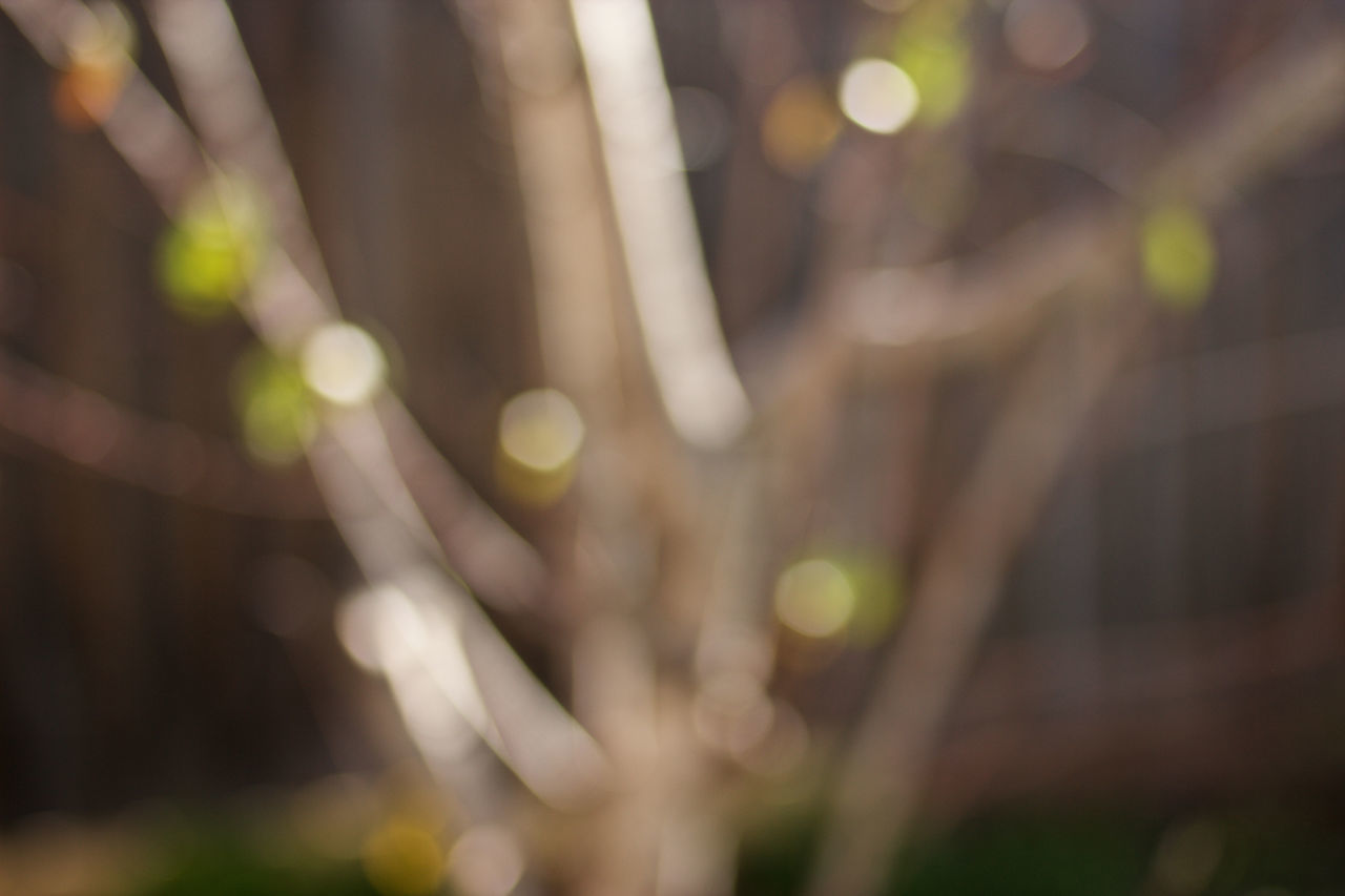 Abstract Abstraction Abstractions Abstractions In Colors Blur Blurry Bokeh Close-up D.O.F Defocused Green Natural Nature Nature Photography No People Outdoors Winter Winter Light Yellow Zen