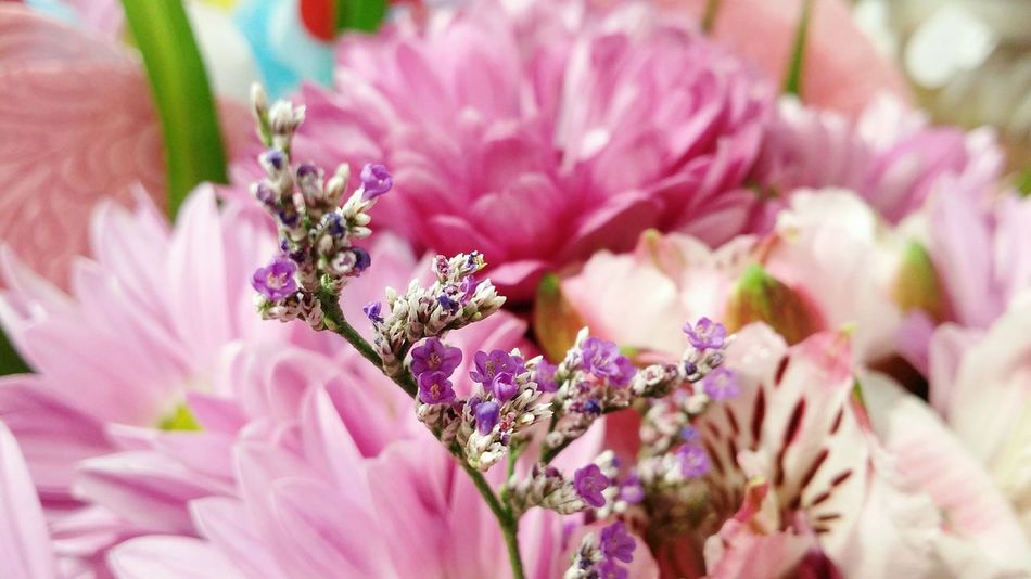 Little Flowers Purple Tiny Flowers Beauty In Nature Pink Color Nature Blossom Flower Flower Head By _photoinn😉