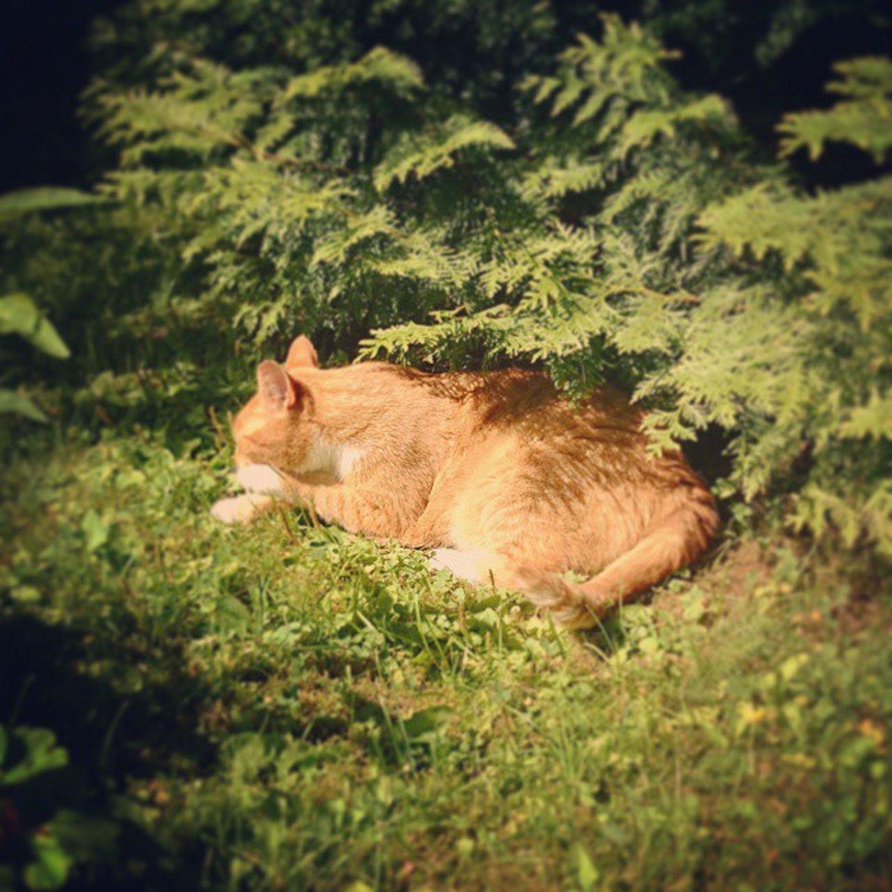 Kissa Nukkuminen Lepo Lepohetki torkut päivätorkut päiväunet cat sleeping nap sonyxperiaz2