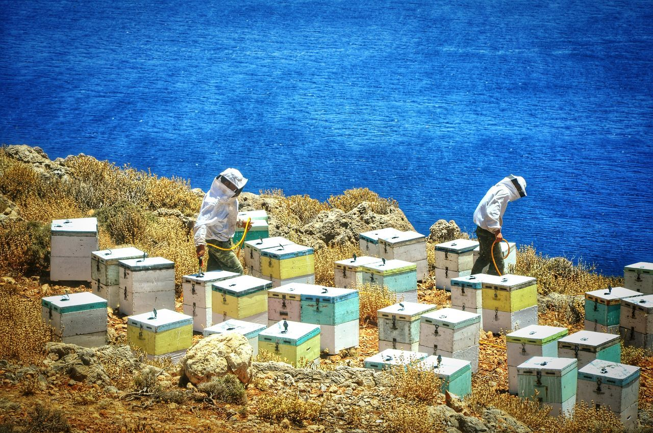 Showcase: February The Week On EyeEm Apiarists Beekeeper Beekeeping Beekeeper, Honey Bees Greek Islands Summertime - Crete Chania