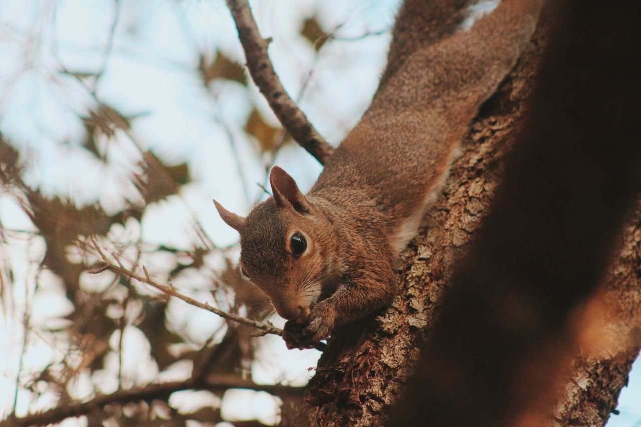 Close-Up Of Squirrel On Tree Against Sky