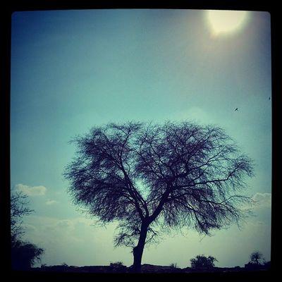 Feeling Lonely.. Jaisalmer Desert Rajasthan India