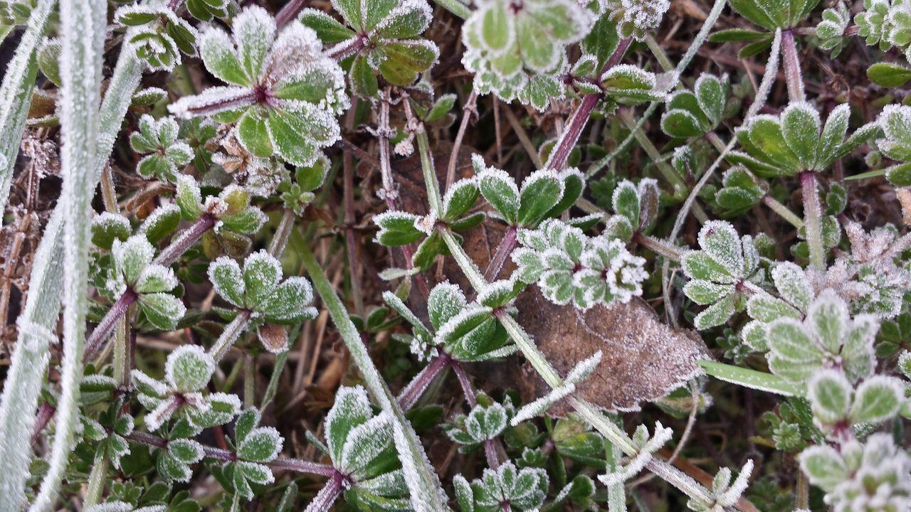 Winter Wintertime 2016😍 Ice Freddo Gelato Erba In Vigna Inverno Semplicity Mobilephotography