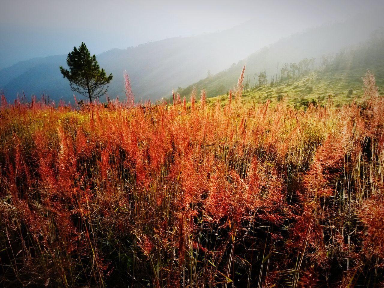Holiday POV Mountain Landscape Nature Holiday Vacation Grassland Grass Volcano Mt_guntur