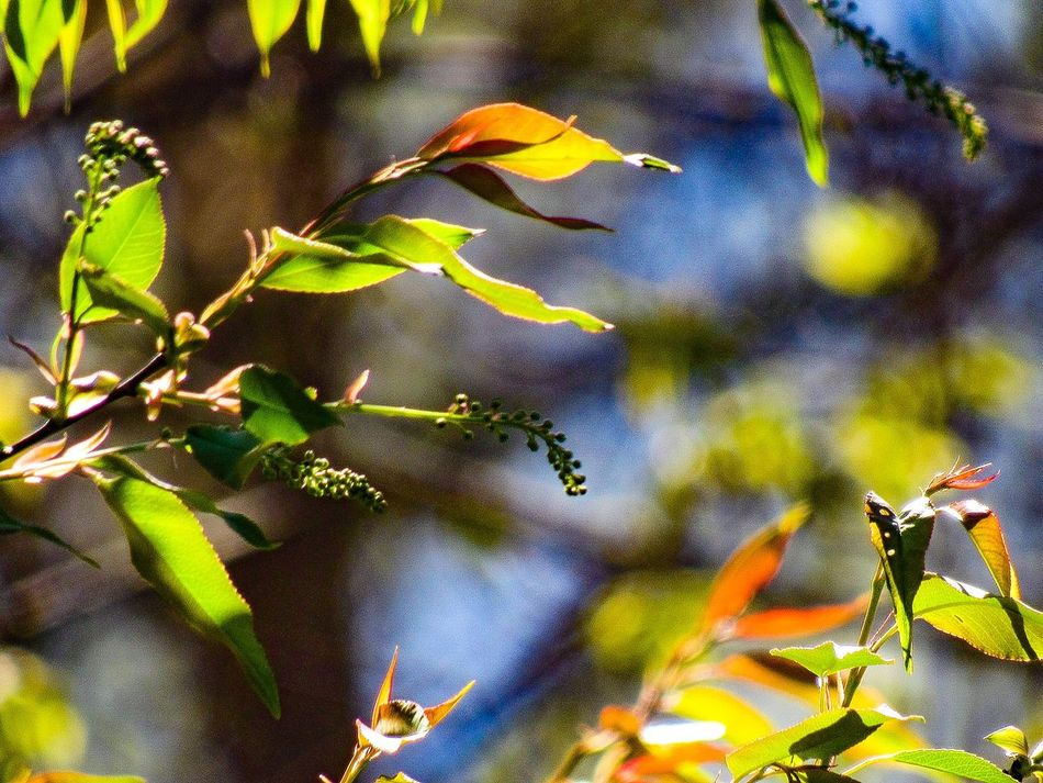 Leaf Nature One Animal Animal Themes Plant Insect No People Growth Outdoors Autumn Animals In The Wild Close-up Day Beauty In Nature Tree Fragility Branch Sky