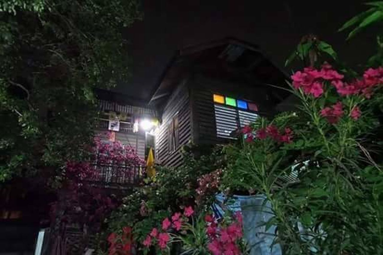 flower, plant, no people, outdoors, growth, tree, building exterior, night, architecture