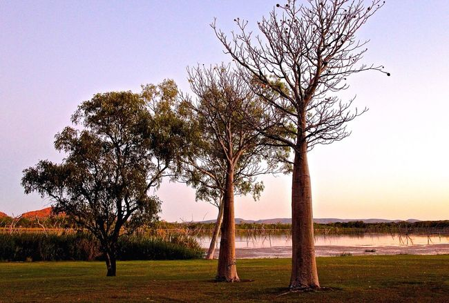 EyeEm Nature Lover Colorful Beautiful Nature Australia Boab Tree Australien Nature Photography Trees Beautiful View Tree_collection