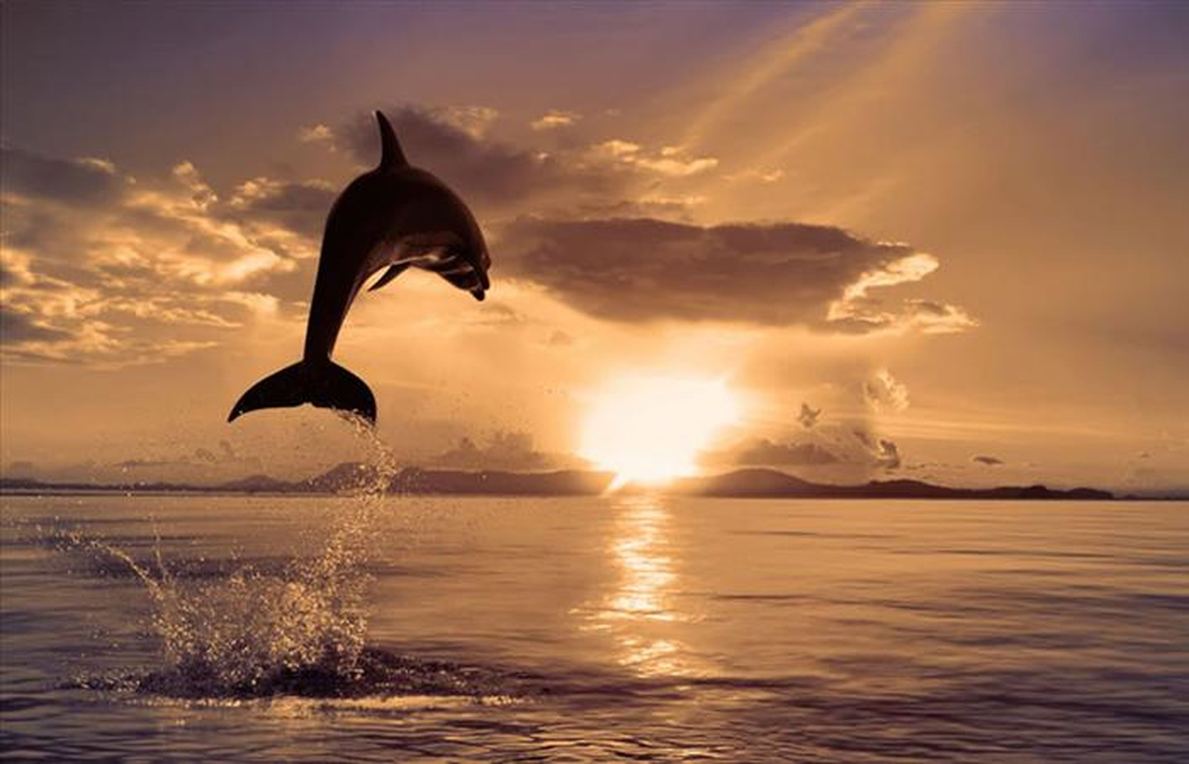 sunset, water, animal themes, bird, sea, silhouette, sun, sky, beauty in nature, one animal, orange color, animals in the wild, reflection, scenics, wildlife, tranquil scene, nature, tranquility, waterfront, idyllic