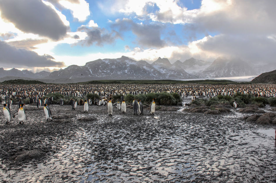 Beautiful stock photos of pinguin, Zoology, animal Themes, animals In The Wild, beauty In Nature