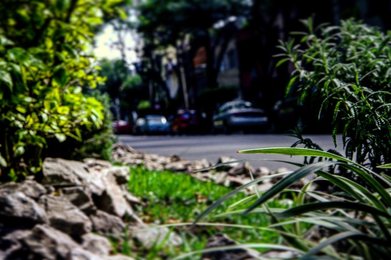 Nature Nature_collection Nature Photography Naturelovers Nature On Your Doorstep Nature_perfection Naturephotography Naturelover Nature Lover Natureporn Naturaleza Naturaleza Urbana Naturaleza En La Ciudad Ciudad De México Cdmx Ciudad City City Life First Eyeem Photo