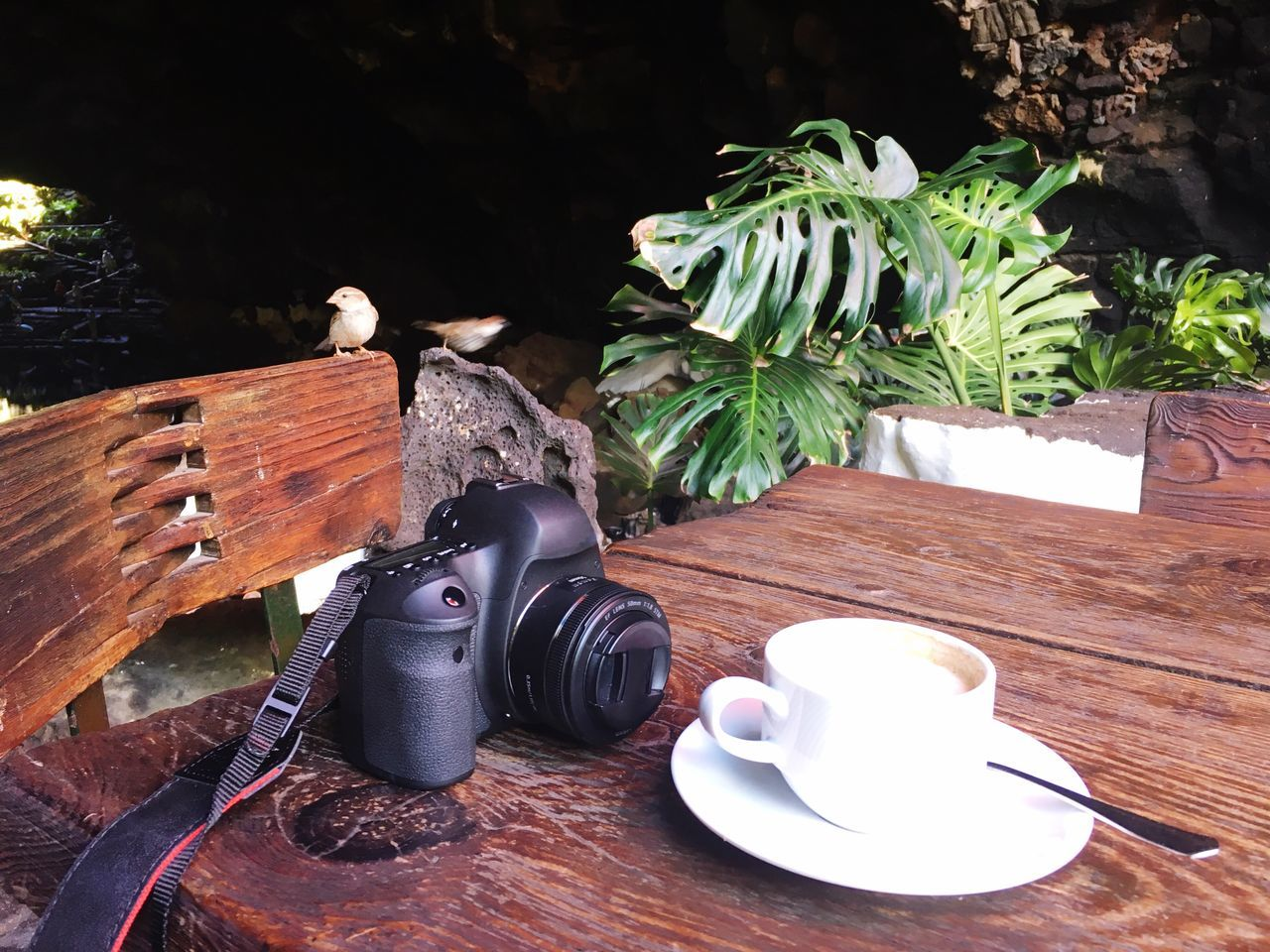 Morning coffee with camera and two sparrows Table Wood - Material No People Day Freshness Animal Themes Close-up Camera Dlsr Coffee Breakfast Sparrow Sparrows Creativity Art Remote Work Remote Working Relaxation Independance Outside Coffee Shop Nature Birds