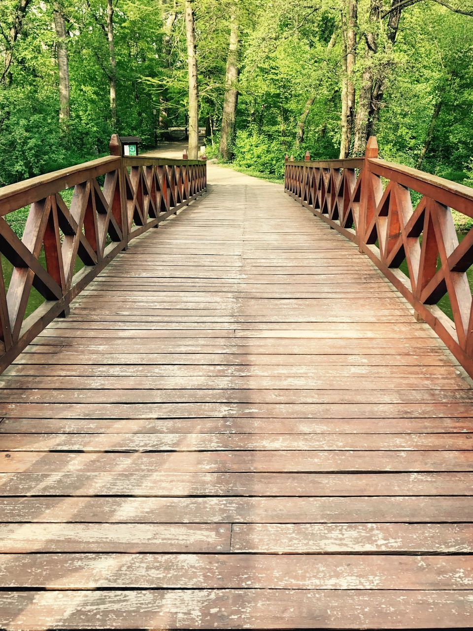 tree, wood - material, railing, the way forward, nature, forest, footbridge, tranquil scene, day, wood paneling, outdoors, bridge - man made structure, tranquility, beauty in nature, no people, growth