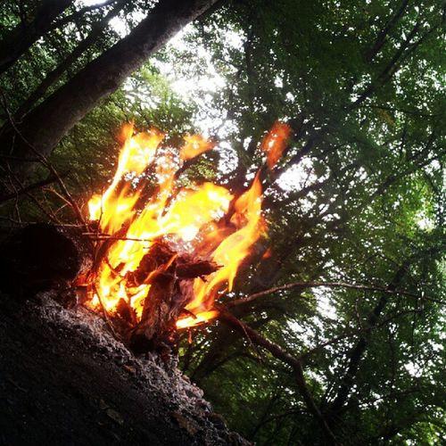 جنگل های روستای زیارت گرگان (خوش چشمه) Weekend Fire آتیش آتش آخر_هفته