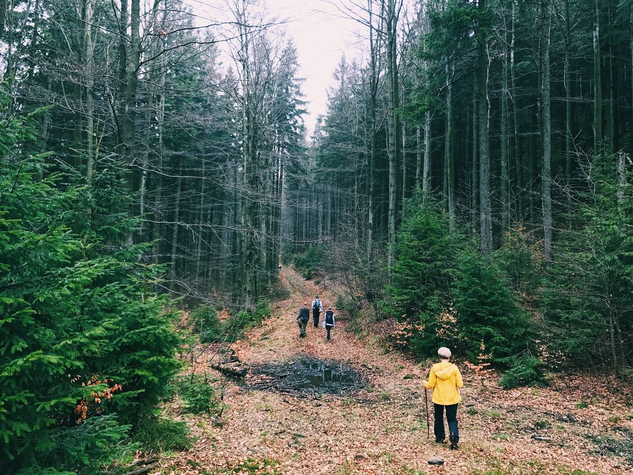 Friends Hiking On Pathway Amidst Trees In Forest