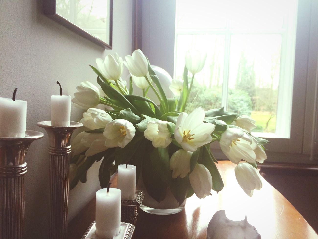 Радуют цветочки Tulips Flower Tulip Beautiful Beauty Nature Flowers House Cosy Cosyhome Light First Eyeem Photo
