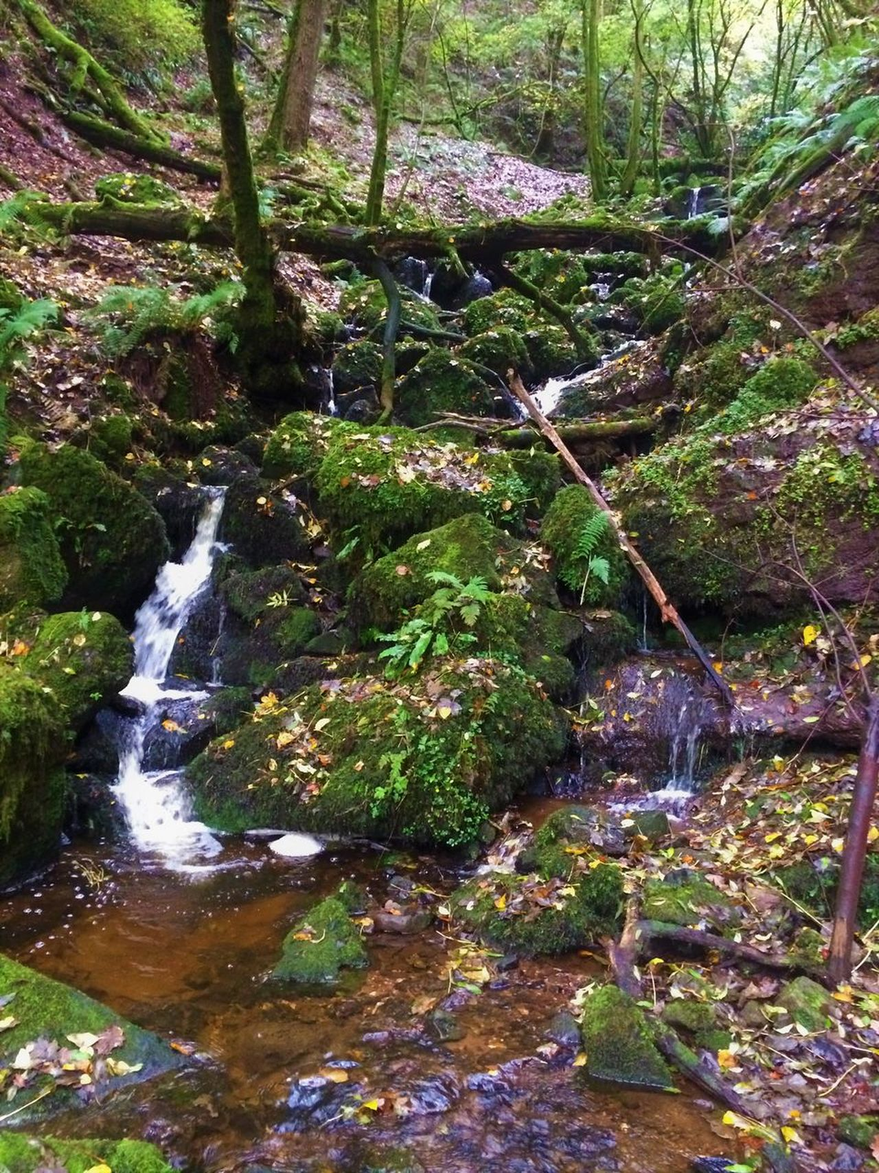 Beauty In Nature Flowing Flowing Water Forest Growth Moss Motion Nature No People Outdoors Plant Rock - Object Stream Tranquility Tree Water Waterfall