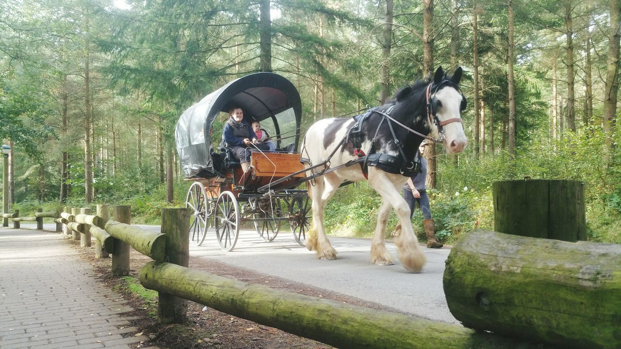 Horse Horse Photography  Horsesofinstagram Horse And Carriage Beauty In Nature Plant Davidson's Photography Outdoors Landscape Forest Wildlife Photography