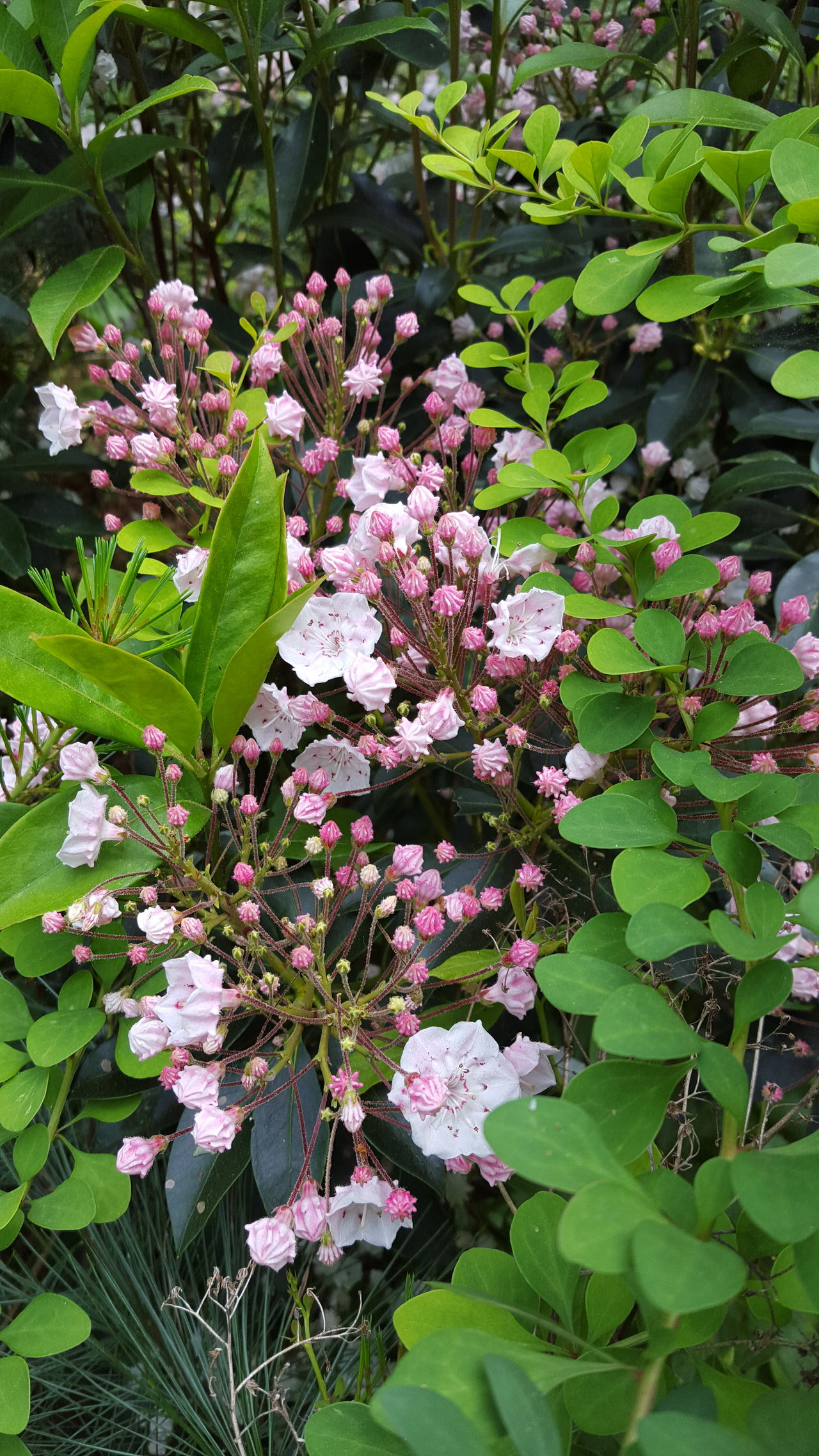 Growth Nature Flower Beauty In Nature Tree Freshness Blossom Green Color Purple Plant Outdoors Springtime Branch Day No People Fragility Lilac Rhododendron Flower Head Close-up Pink Pink Color Hiking❤ Riders Park Tranquil Scene