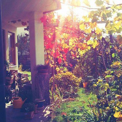 #Autumn spirit from my parents' #garden Garden Autumn