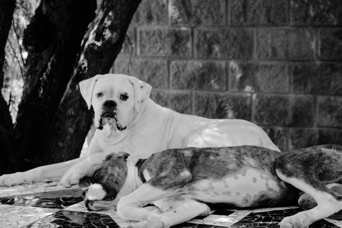 Vida de perro First Eyeem Photo