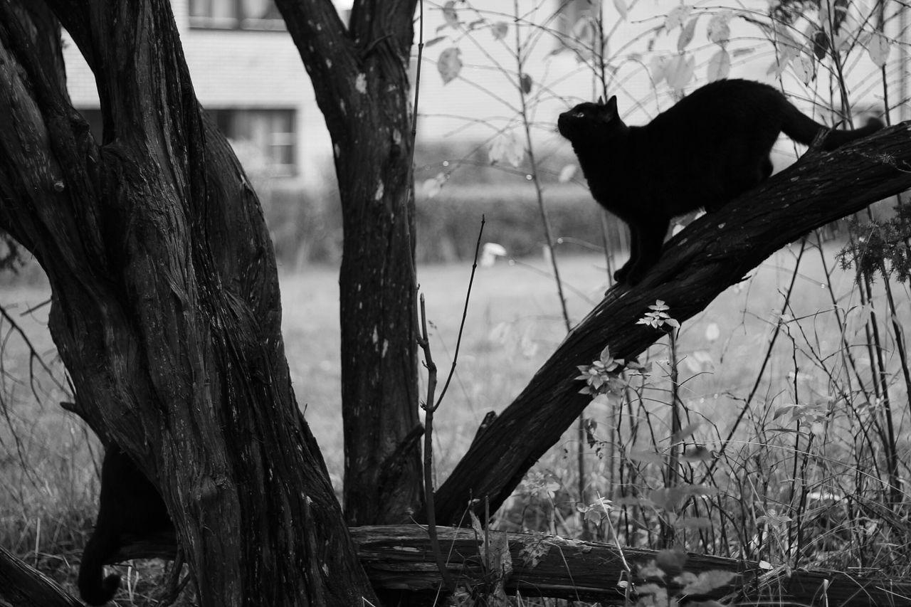 Beautiful stock photos of kitty, Alertness, Animal Behavior, Animal Themes, Animals Hunting