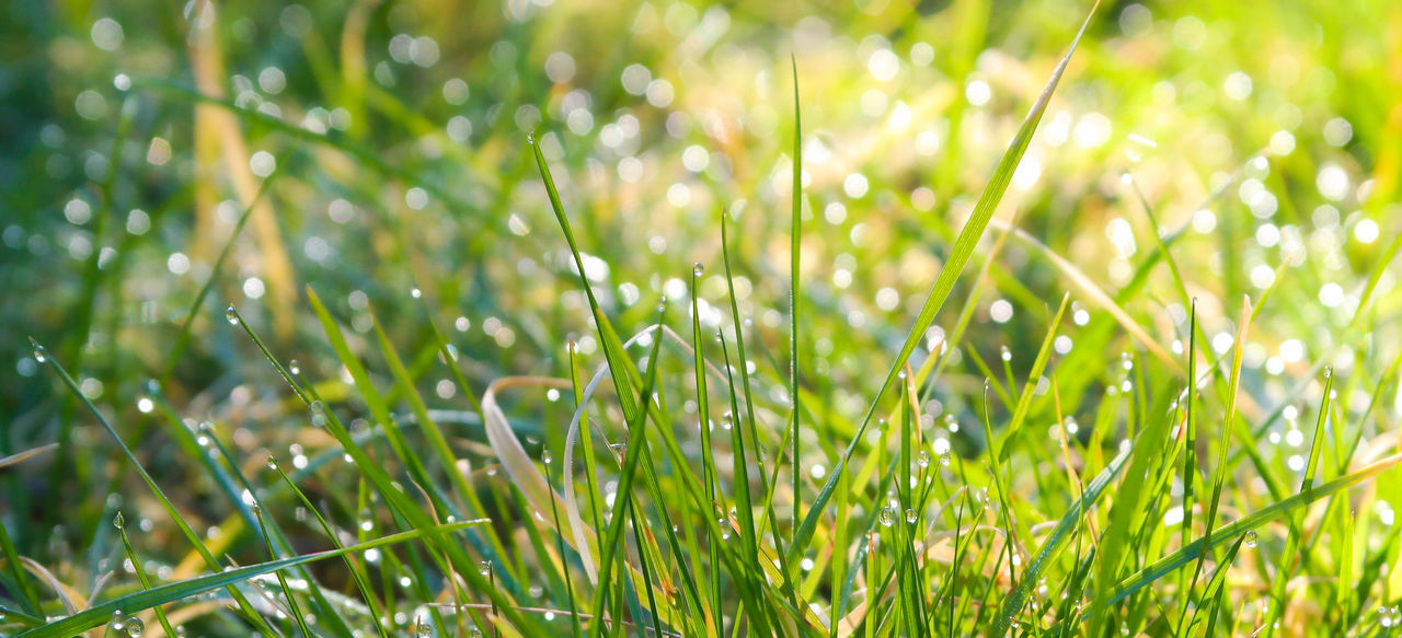 Dewdrops in the morning. Dewdrops Bokeh Green Macro Morning Light Grass Spring Nature Composition Light