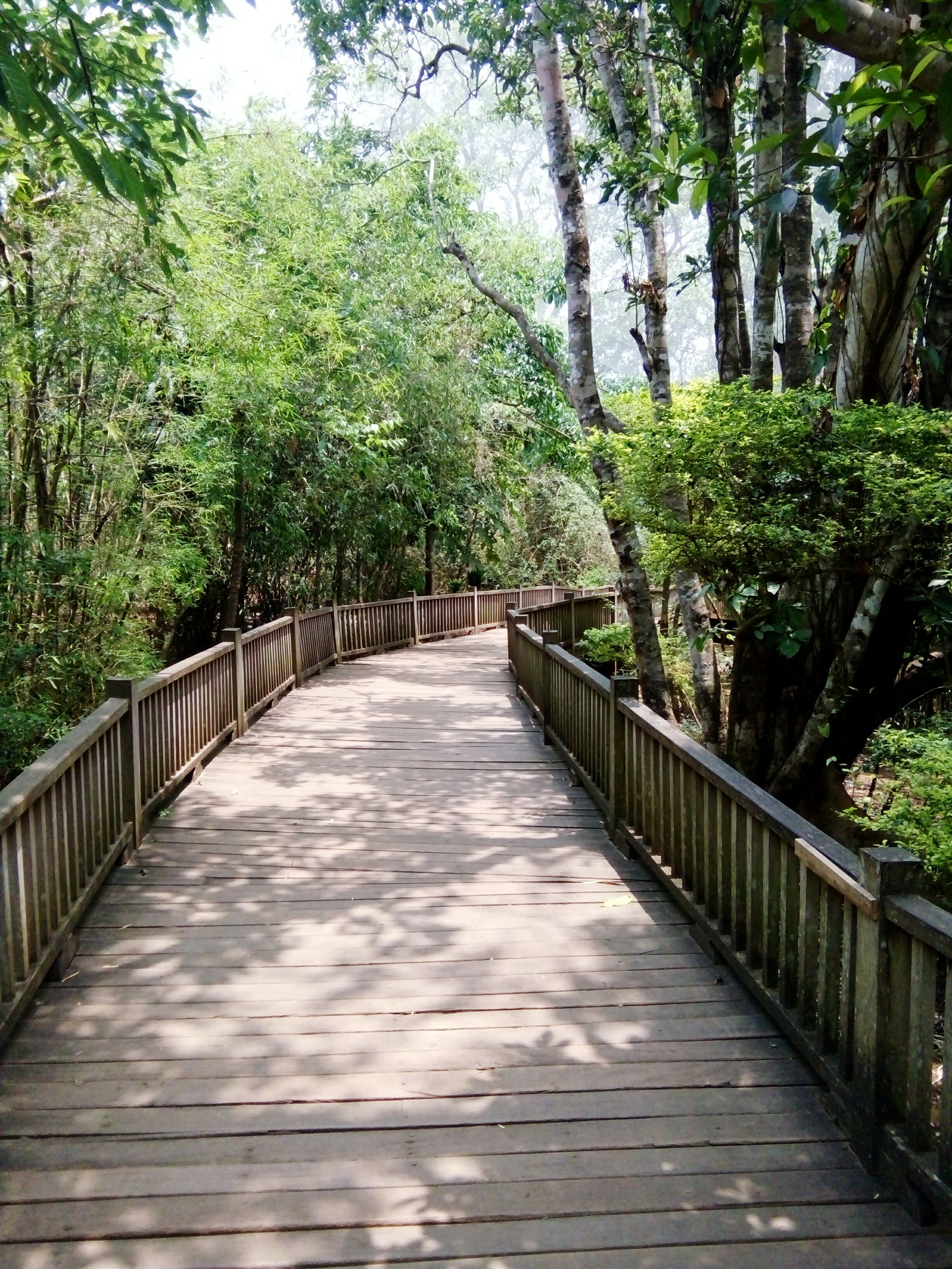 tree, the way forward, footbridge, railing, connection, tranquility, forest, diminishing perspective, growth, bridge - man made structure, tranquil scene, green color, nature, beauty in nature, vanishing point, walkway, narrow, scenics, lush foliage, footpath