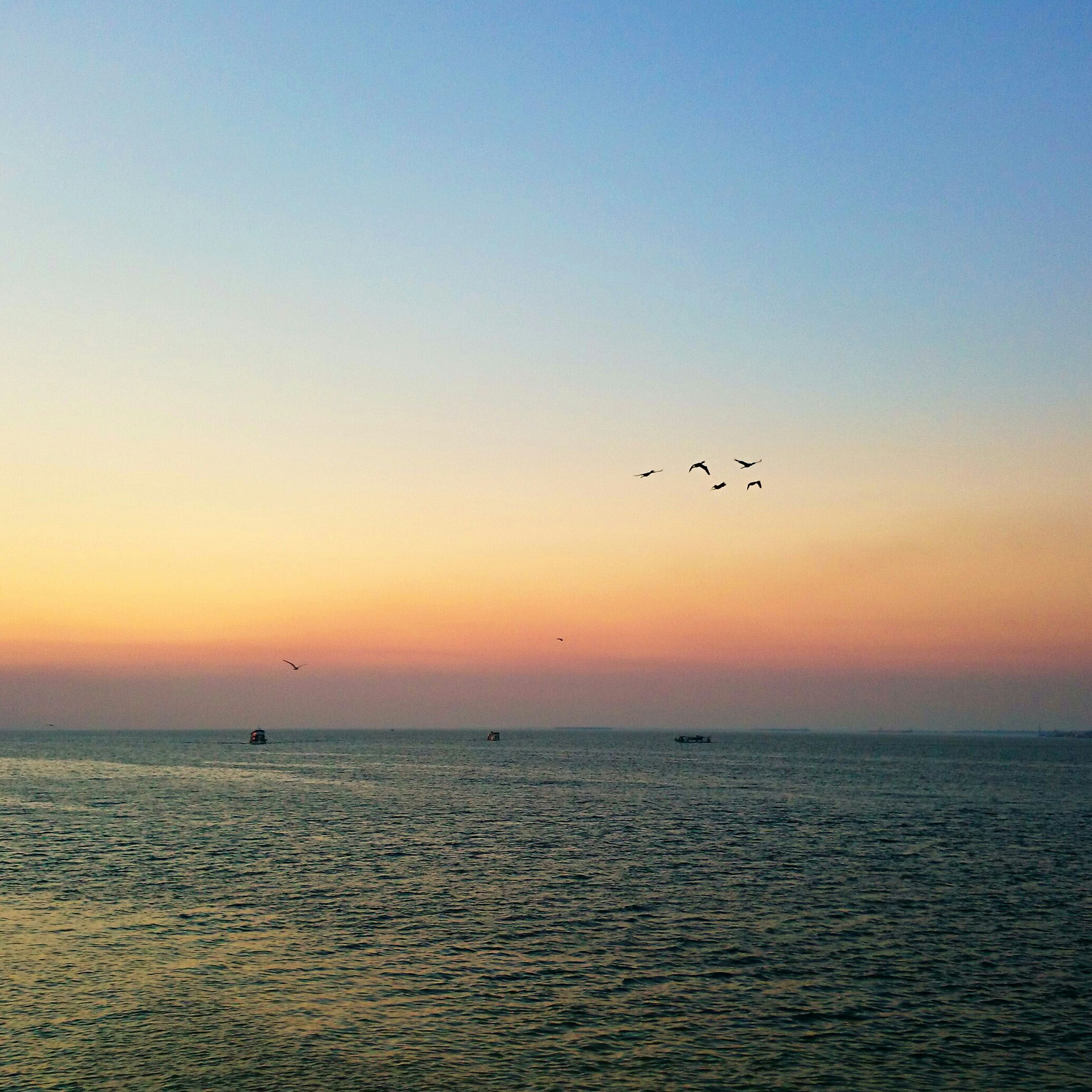 bird, flying, animal themes, sunset, animals in the wild, sea, water, wildlife, horizon over water, scenics, tranquil scene, beauty in nature, silhouette, waterfront, tranquility, nature, orange color, idyllic, flock of birds