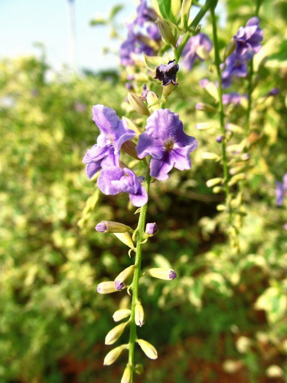 Macro Photography Florals Quality Time Nature_collection Nature Flower Violet By Motorola Violet Flowers Violet And Green Depth Of Field Tapering