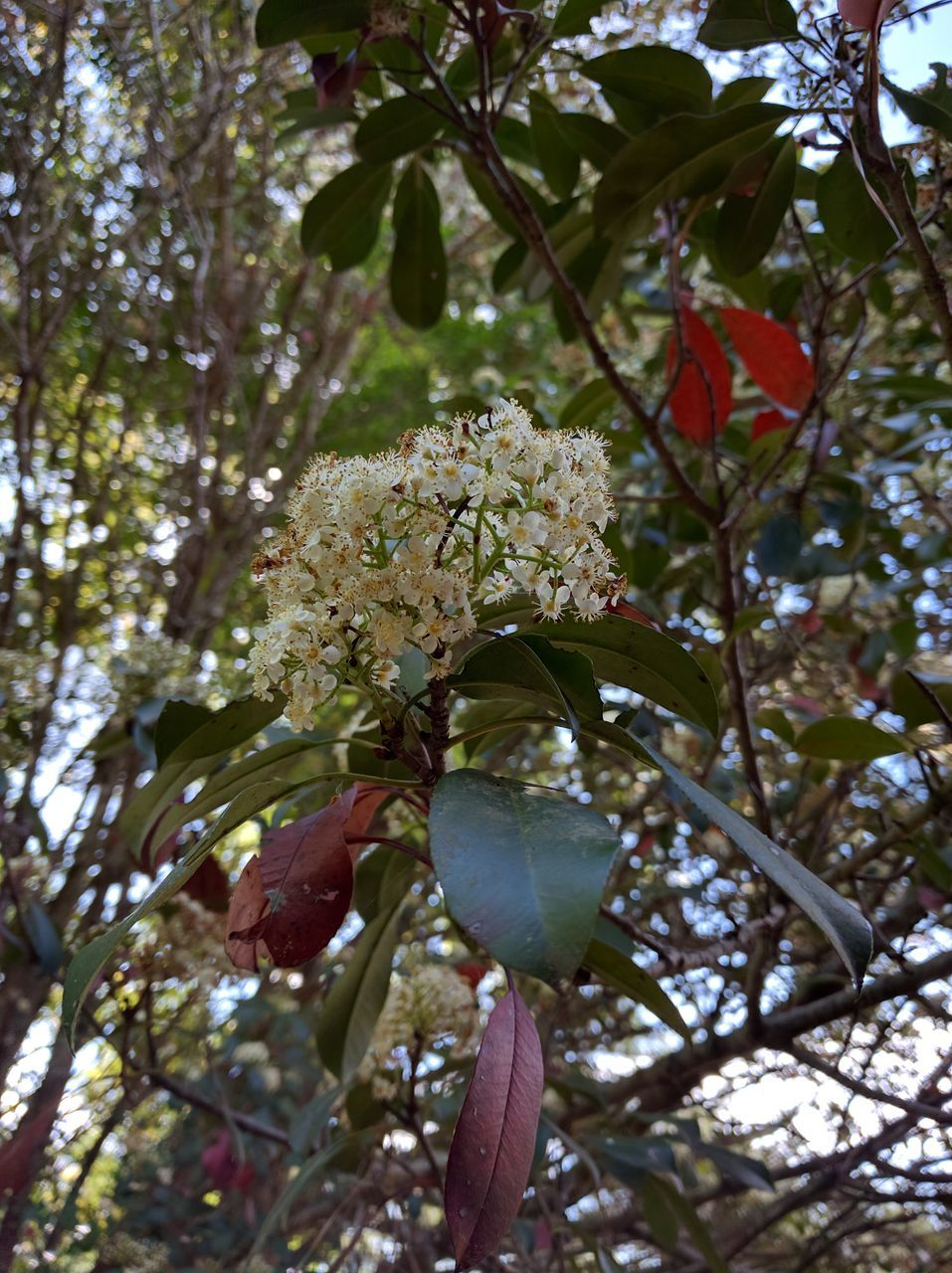 flower, tree, growth, branch, nature, beauty in nature, fragility, low angle view, petal, freshness, no people, blossom, day, springtime, blooming, flower head, outdoors, leaf, plant, close-up