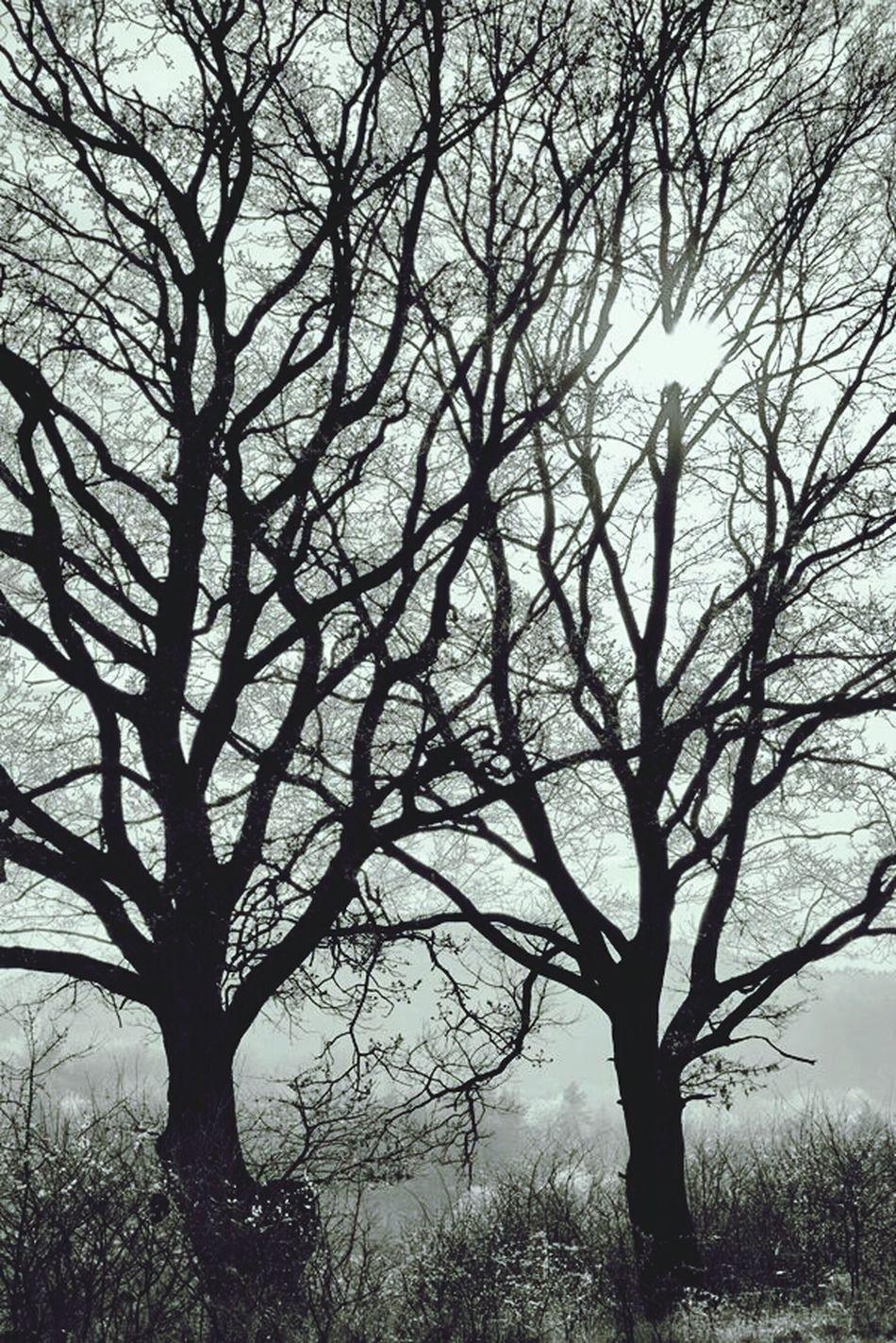 Monochrome Back To Black Light And Shadow Oak Trees