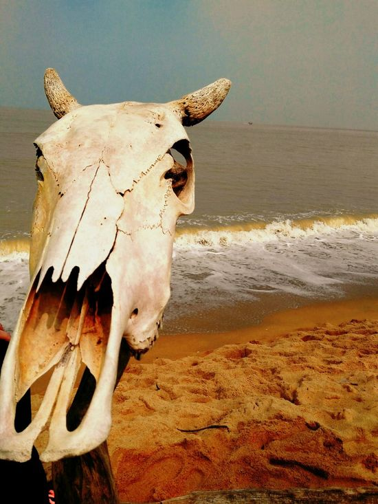 No Caption First Eyeem Photo Deadly Cowboys Seaside