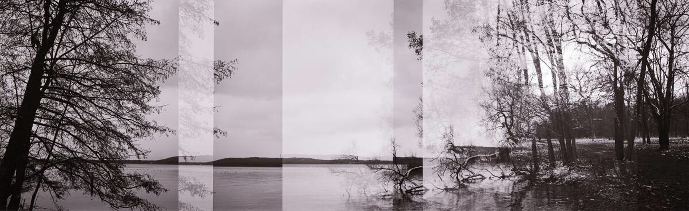 Fragments... The Innovator Here Belongs To Me Analogue Photography Agfa Isola TX400 Film Photography Lake View Lakeshore Lakeside Nature Trees Winter Spring Blackandwhite Monochrome Schwarzweiß Black And White Müggelsee - Panorama Cut And Paste