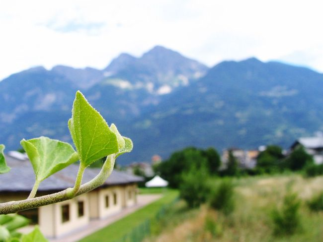 Leaf Mountain Mountain Range Scenics Focus On Foreground Beauty In Nature Close-up Growth Freshness Nature Green Color Plant Tranquility Tranquil Scene Non-urban Scene Fragility Blue Day Sky Outdoors Italy Aosta