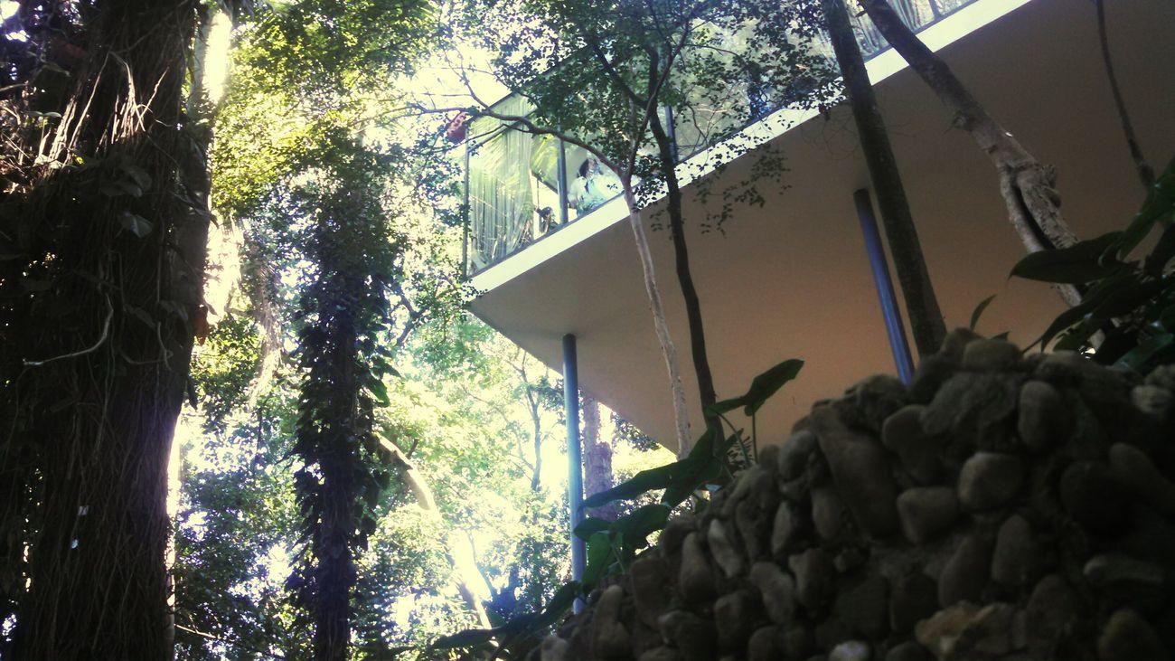Casadevidro Enjoying Life Lina Bo Bardi Arquitecture Arquitetura