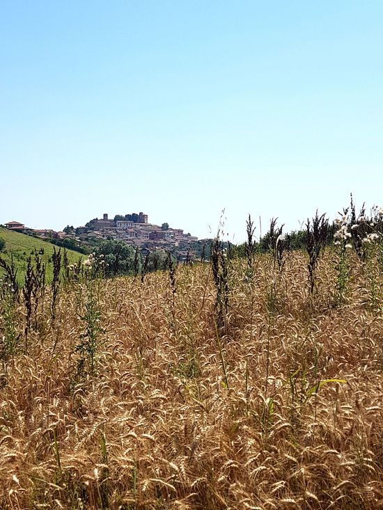 Agriculture Field Sky Outdoors Day Growth Rural Scene No People Nature Cereal Crops Landscape Langhe Travel Destinations Piedmont Italy Beauty In Nature