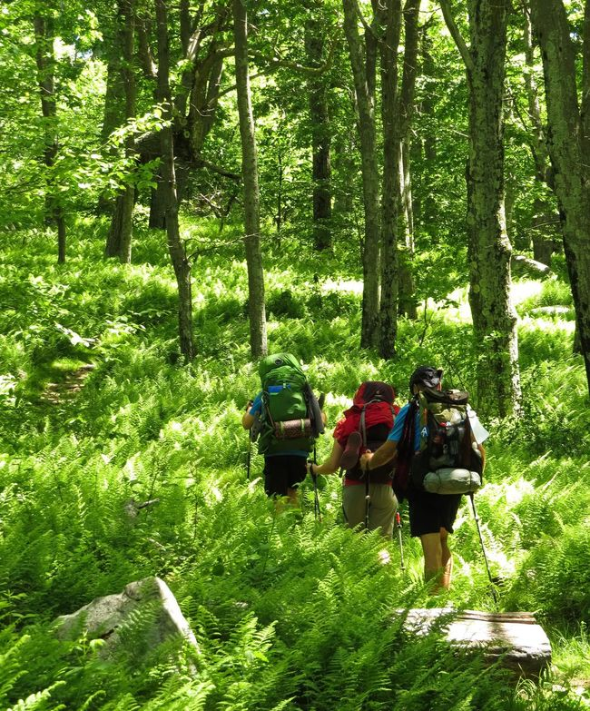 Hiking the Trail Hiking Trail Nature Appalachian Trail Walking Forest Backpacking Backpackers Thru-hikers People And Places