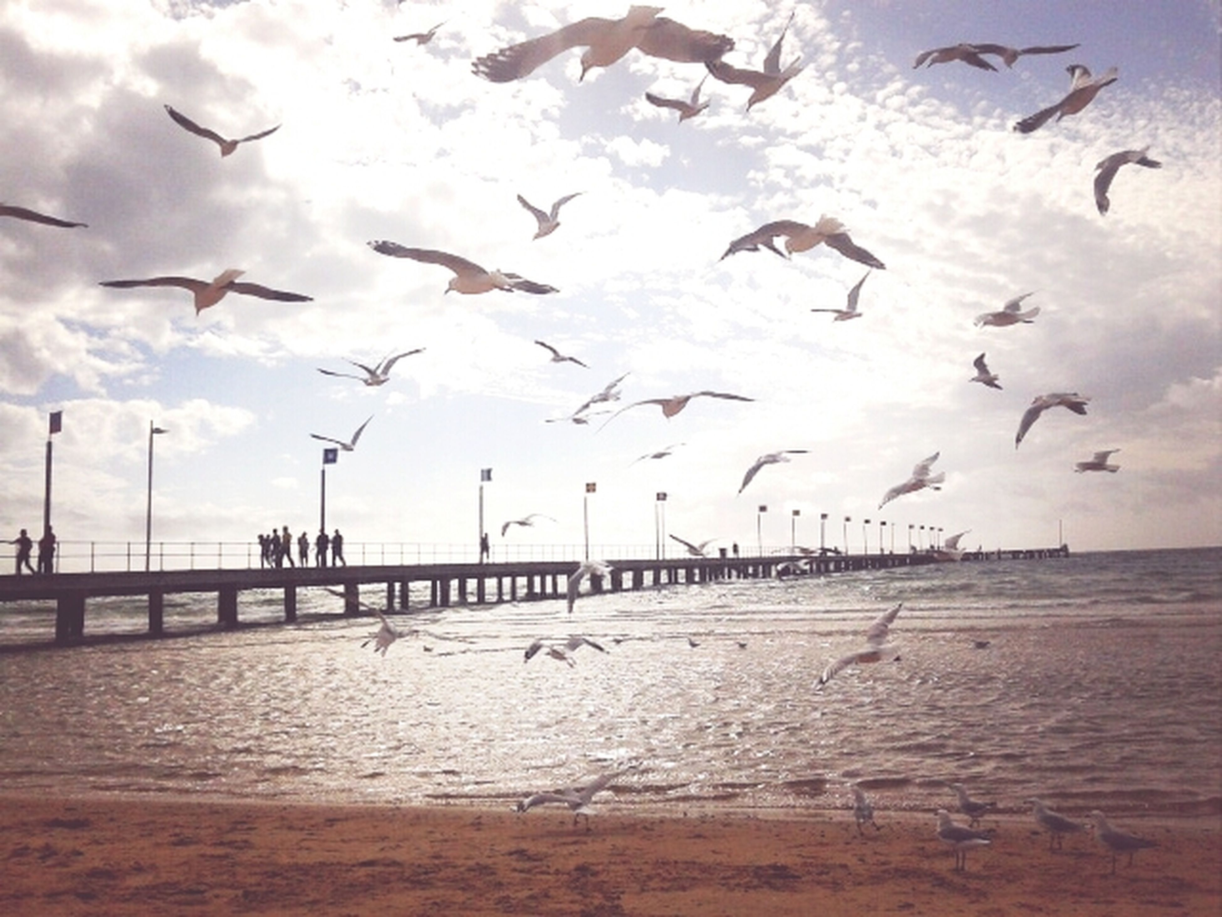bird, sea, animals in the wild, water, animal themes, flying, wildlife, seagull, beach, flock of birds, sky, horizon over water, nature, shore, built structure, scenics, tranquility, pier, sand