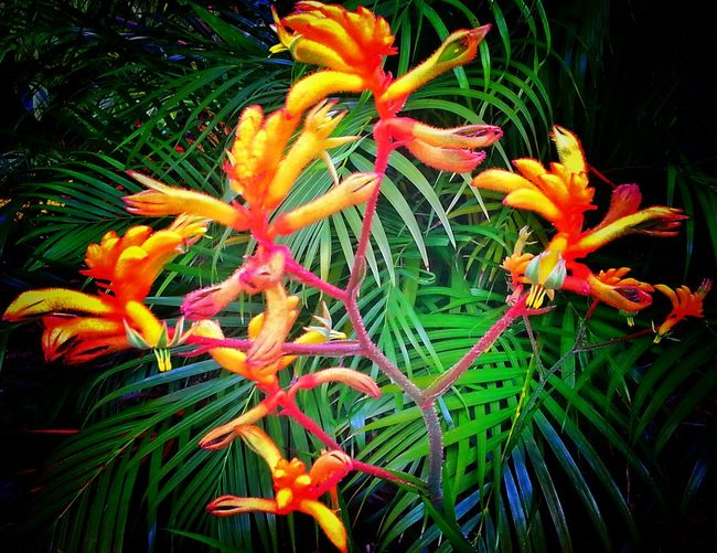 Exotic Flower Exotic Flower And Palm Florida Beauty Flowers In Our Hammock Corner In Our Backyard Orange And Green Orange Color