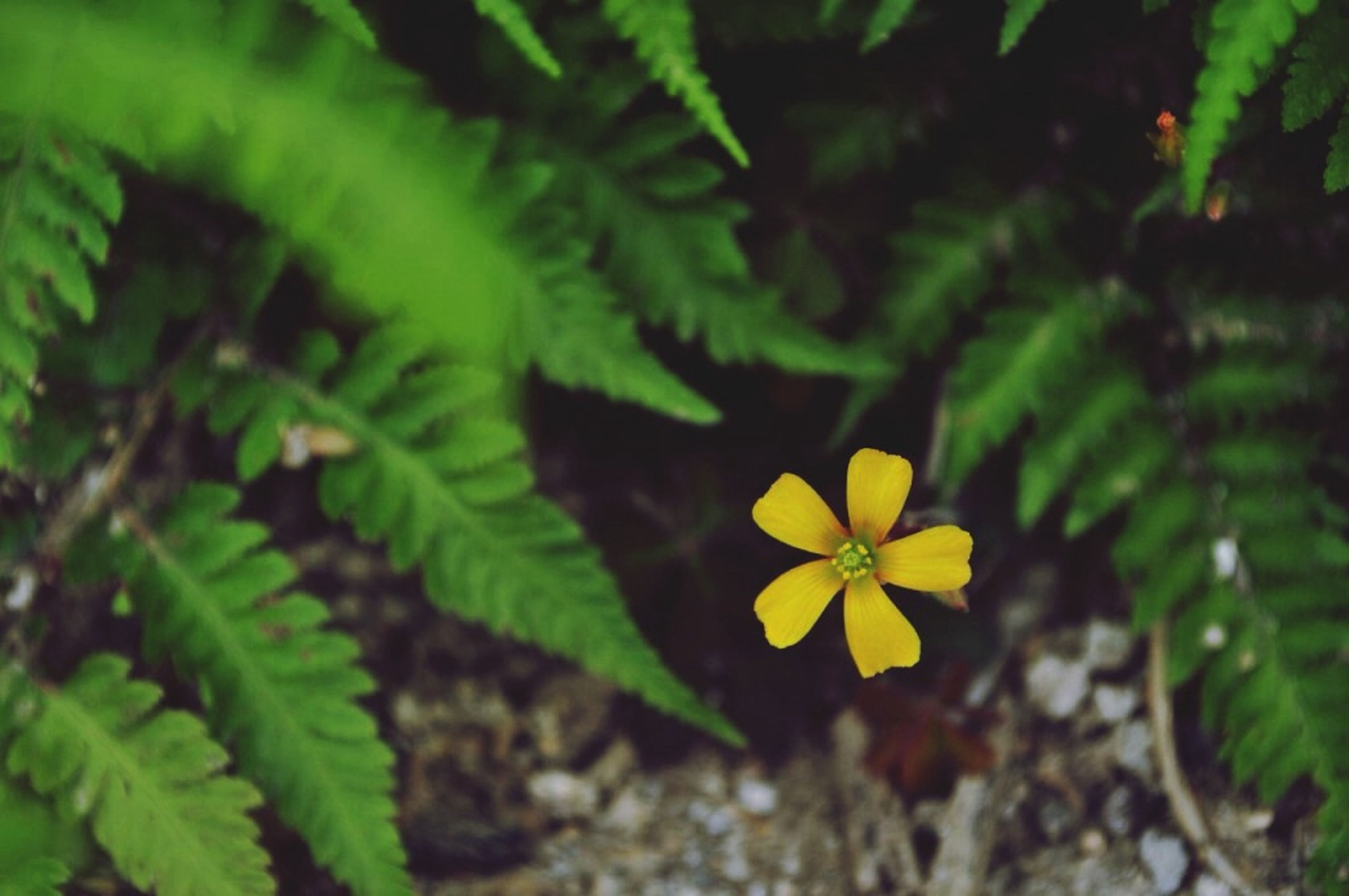Taking Photos Flower Nature