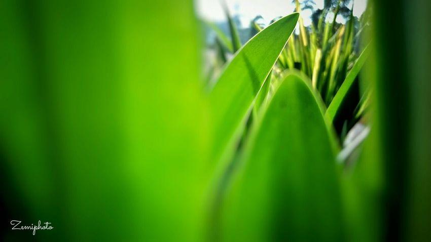 The Great Outdoors - 2015 EyeEm Awards morning Good Morning Relax Time  Green Sun Wismameutia Pertamina.ep