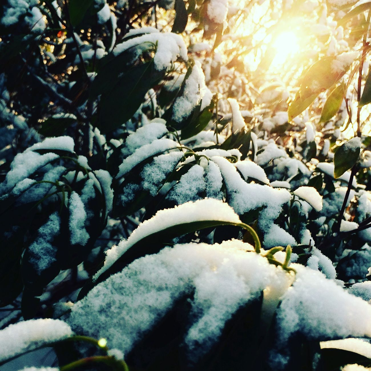 Nature Sunlight Close-up Winter Cold Temperature Outdoors Beauty In Nature Day Sunbeam Leaves No People Water