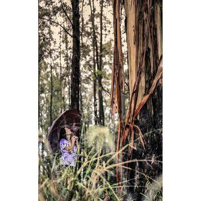 Mãe. Parededevidro Fotoxigenio Mãe Floresta Nikon Nikontop Umbrella Forest Mother @nikontop @instagram Desafioprimeira